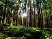 lichtdurchfluteter Wald Harz