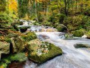 wilde Bode im Harz
