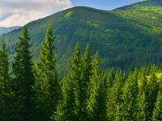 grüner Harzwald