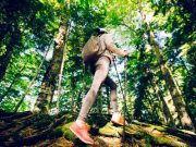Wandern Wald Börse